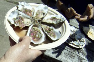 Oysters at the Angel Island Cafe