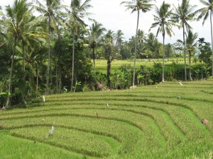Jatiluwih Valley rice terraces on Bali