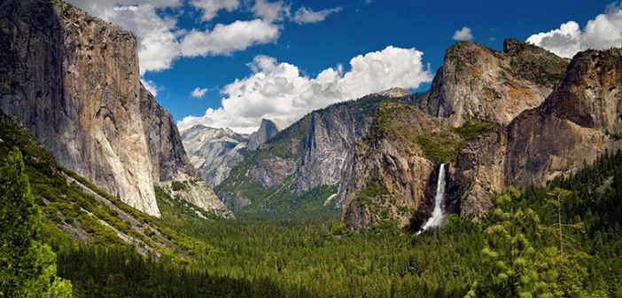 Springtime in Yosemite National Park: Wildflowers and Waterfalls